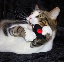 Chat jouant avec une souris