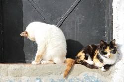 Le toilettage du chat
